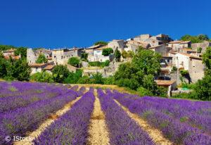 WE Vaucluse @ Vaucluse